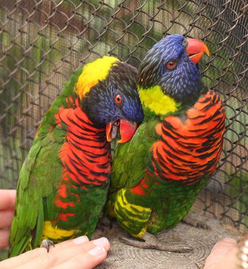Birds two