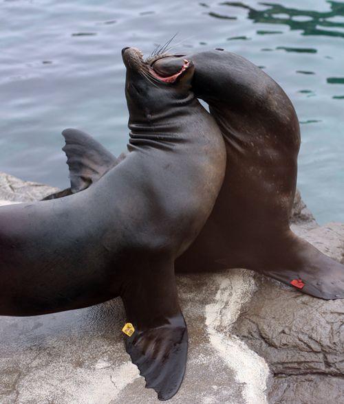 Seals three