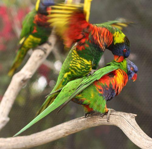 Birds one