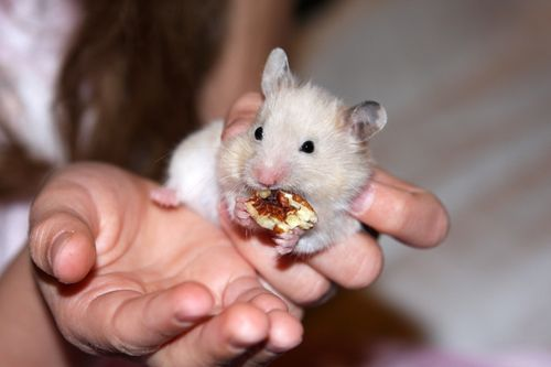 Hampster one