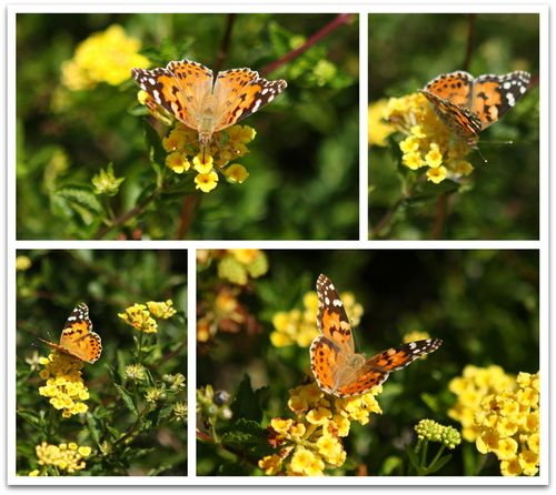 Butterfly collage two