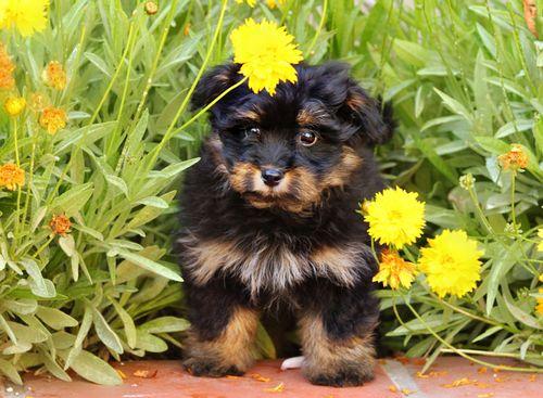 Sally dog two