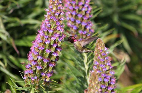 Hummingbird bee photo