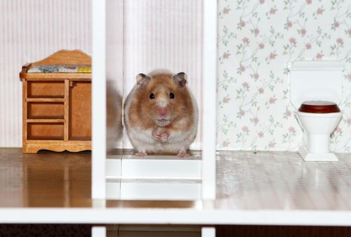 Hamster two