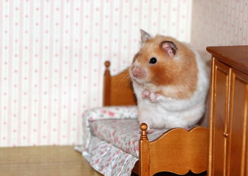 Hamster one