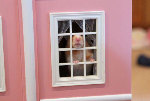 Hamster three