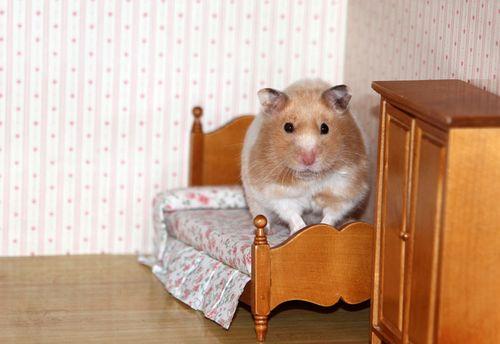 Hamster six