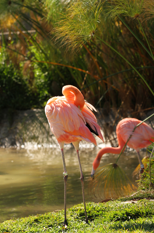 Flamingos two