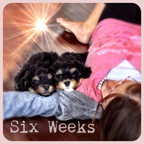 Six weeks