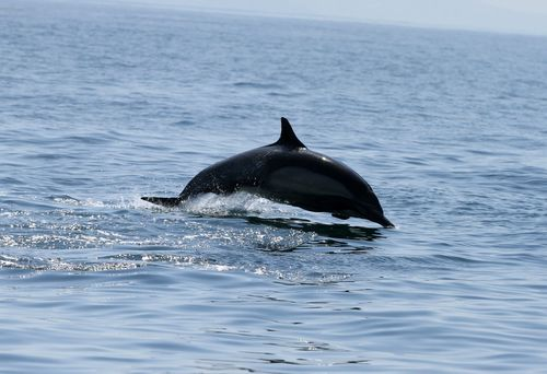 Dophin two