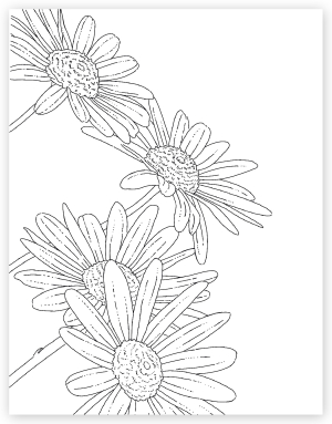 Daisy watercolor card