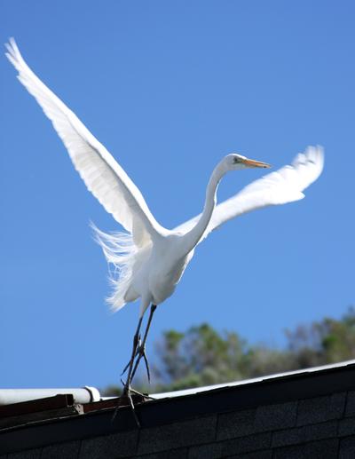 Bird_five